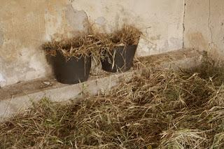 Nesting area