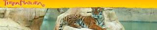 Tiger ar Terra Natura