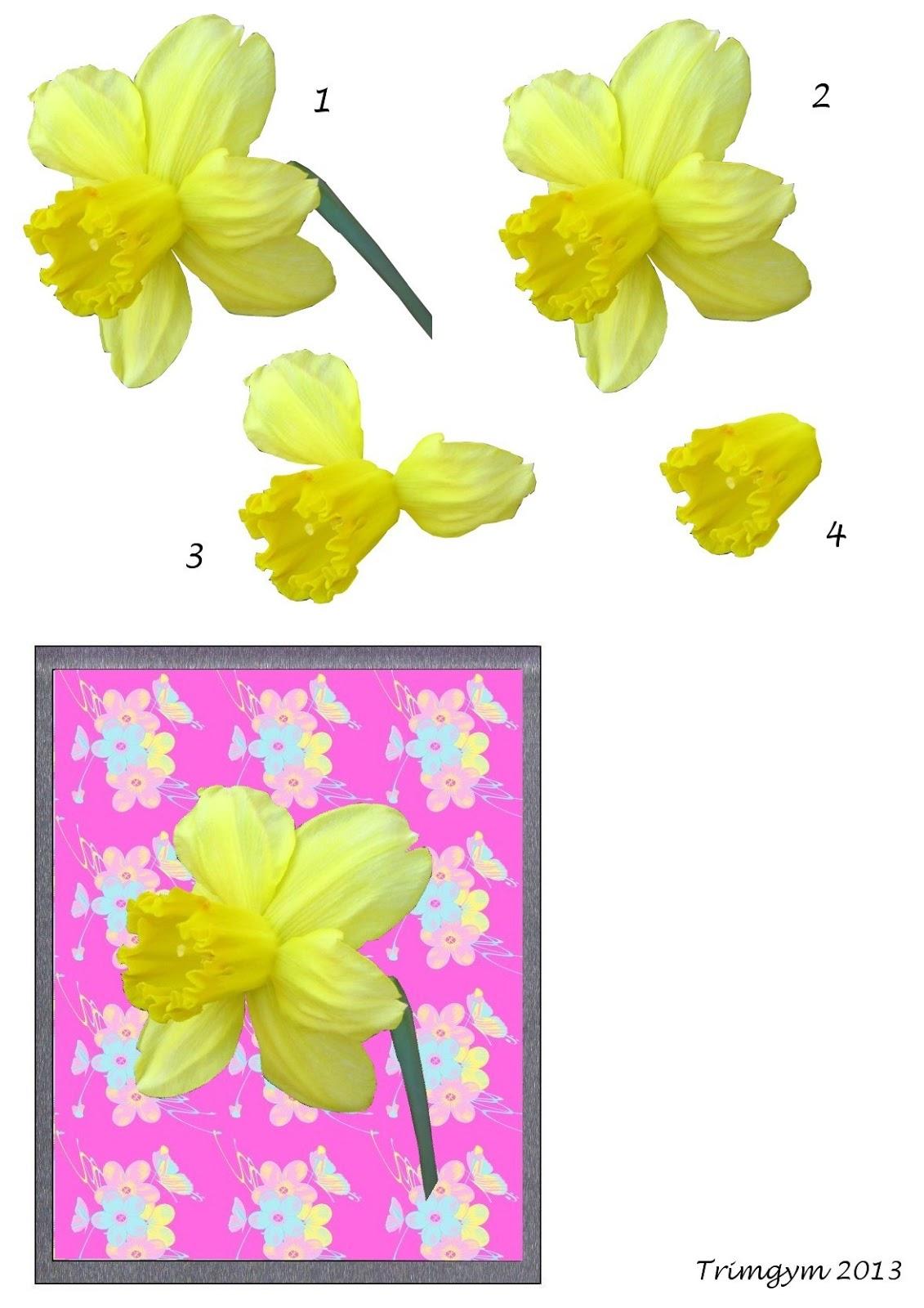 http://4.bp.blogspot.com/-M1o39UviFsM/UxH34lOR2MI/AAAAAAAASGM/oQEPi7c6uEU/s1600/Daffodil+decoupage+by+Trimgym.jpg