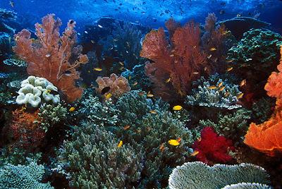 Foto Pemandangan Bawah Laut