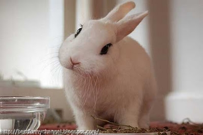 White bunny.