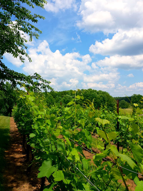 NC Wine Adventures in the Yadkin Valley Wine Region. Great for a getaway for girlfriends, families, and couples. In this post, we explore the wines of six different wineries. This is McRitchie Winery and Ciderworks.