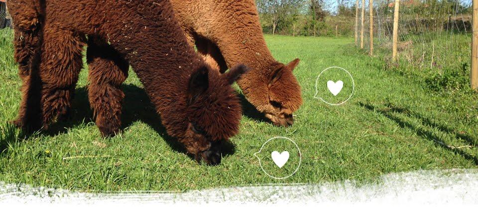 Piccolo Alpaca Blog