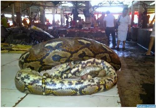 Pasar Ngeri Di Sulawesi Utara Menjual Daging Haiwan Liar