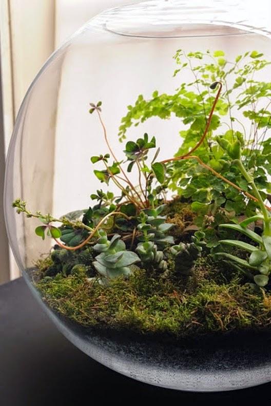 Vida ecoverde como hacer un jardin en una botella for Peceras de jardin