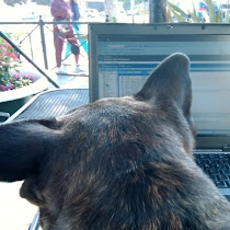 Mulligan Blogging Away
