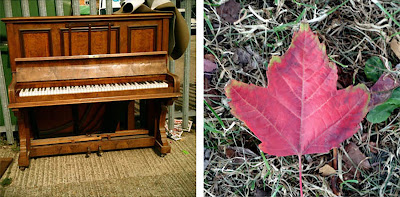 piano and red leaf