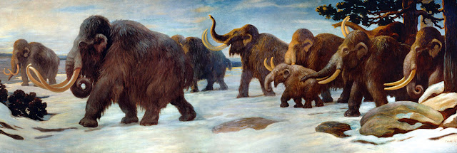 Wooly mammoths (public domain)