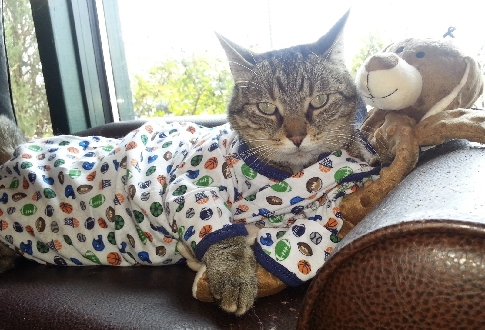 A cat in pajamas, looking a little grumpy