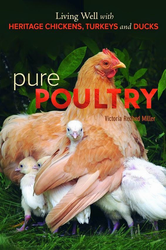 Pure Poultry by Victoria Redhed Miller