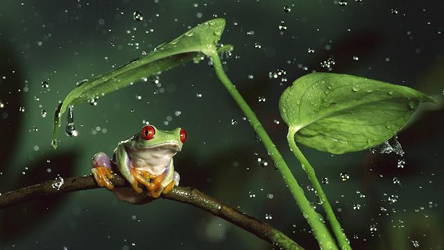 Rana verde bajo la lluvia