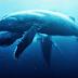 Underwater Realm - As incríveis imagens de um fotógrafo de Anuar Patjane