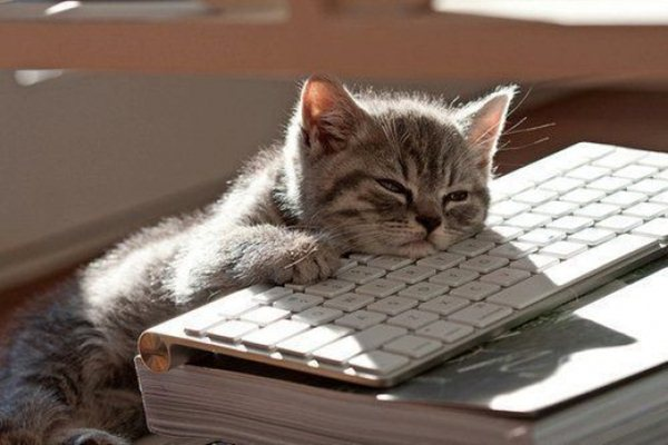 kitten sleeps on keyboard, funny cat pictures, funny cats