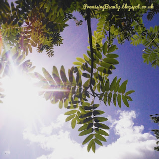 Lookin up through Rowan tree leaves at the blue sky and bright sunshine. The magical rowan tree in the garden.