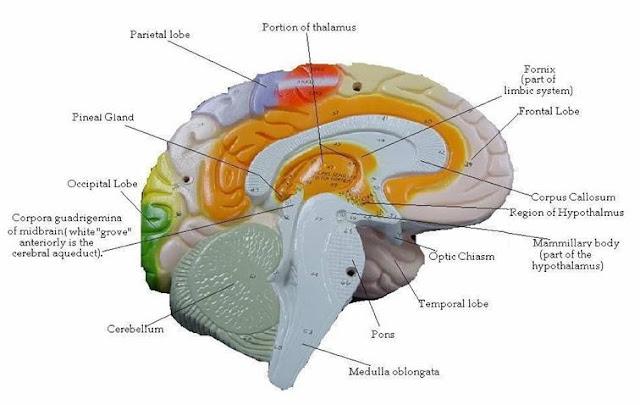 Brain Information4