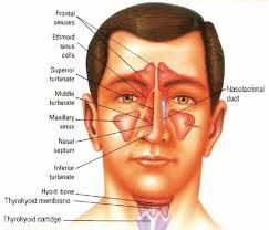 Cara Mengobati Penyakit Sinusitis dengan Herbal
