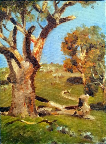 Oil painting of a Manna Gum in strong afternoon sunlight, with trees and a hill in the background.