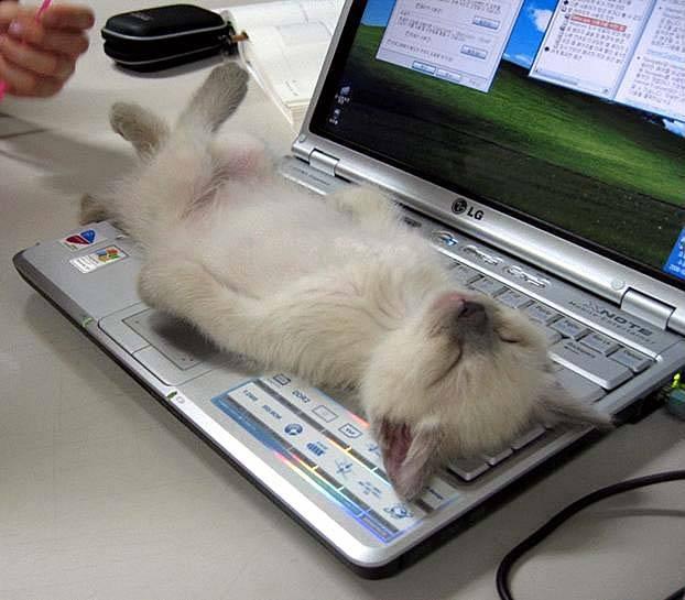 Useful Cat as a Keyboard Accessory