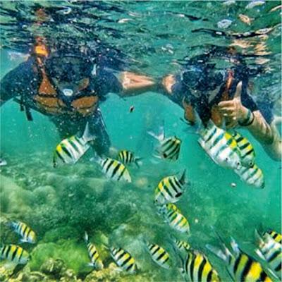 Image of Sonerkeling pantai Nglambor