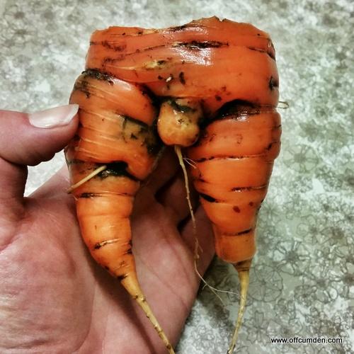 Rude carrot