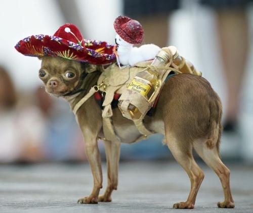 Fotos con perros en situaciones muy graciosas