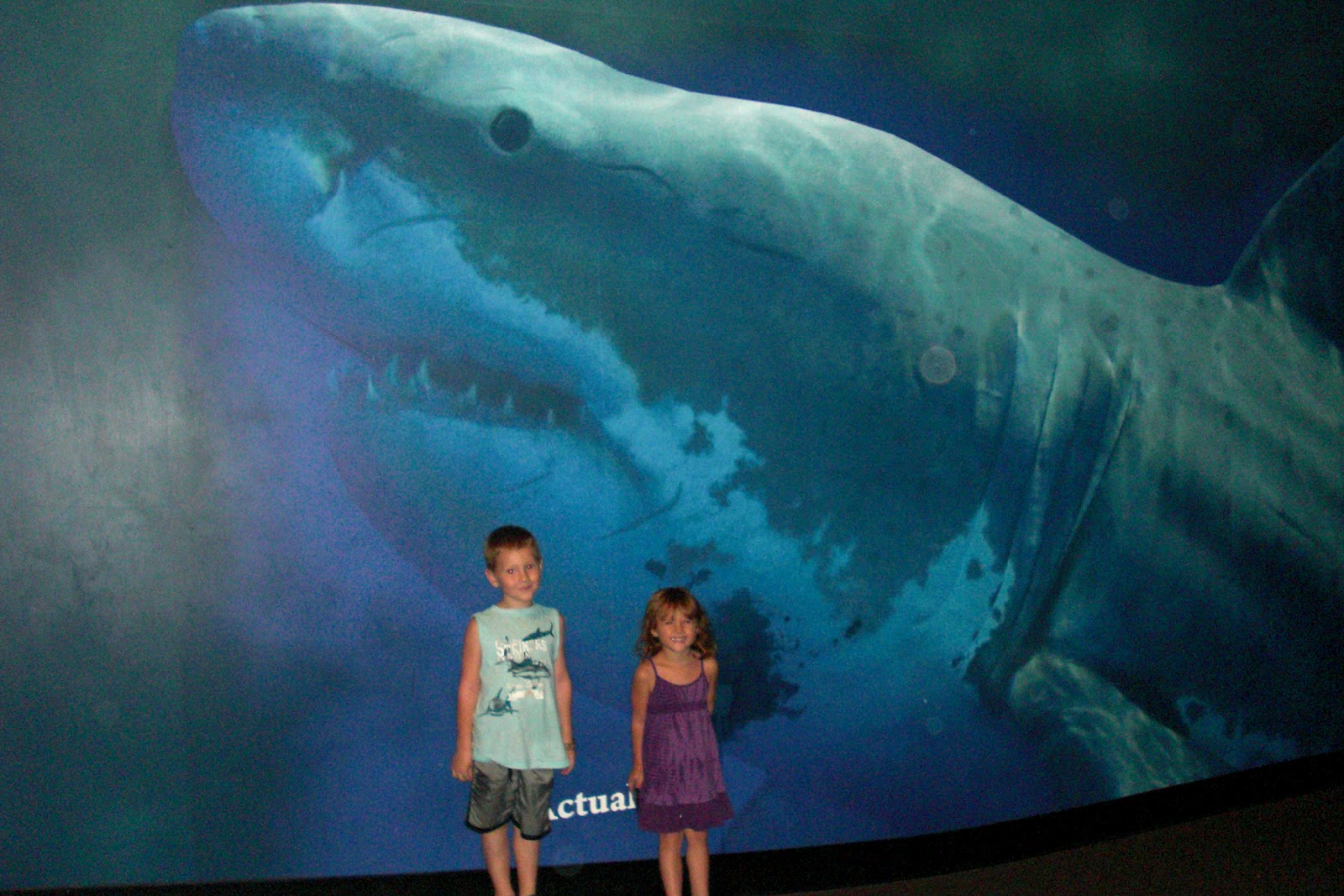 The gallery for --> Megalodon Shark Sightings 2012