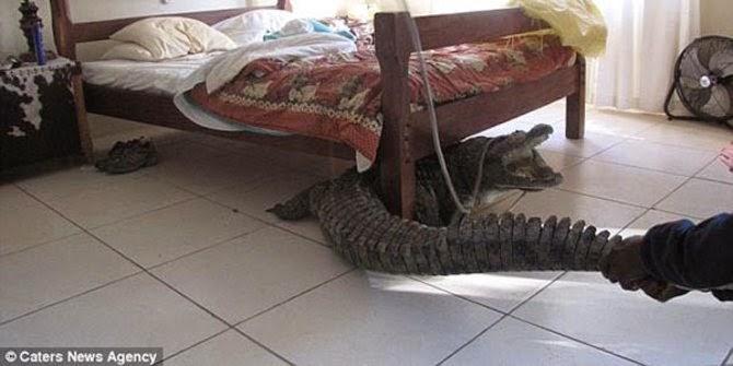 6 benda aneh dan mengerikan yang ditemui di bawah katil