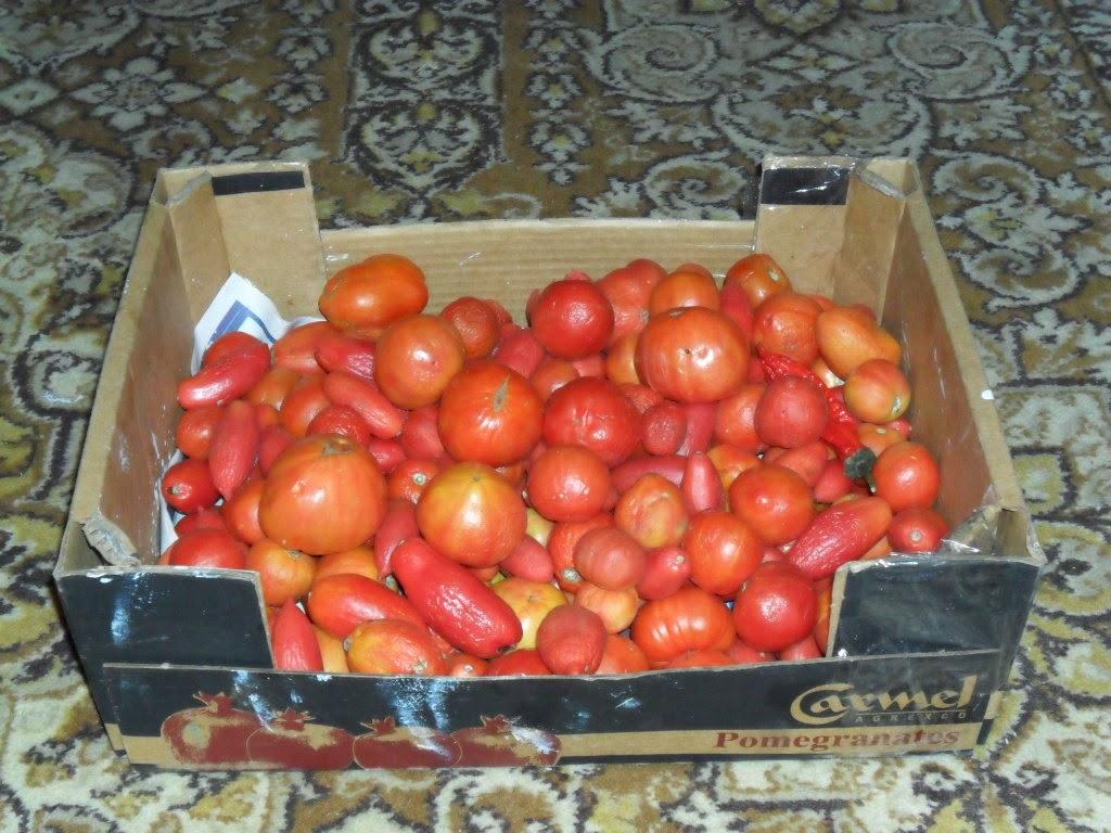 Свои помидоры к новому году
