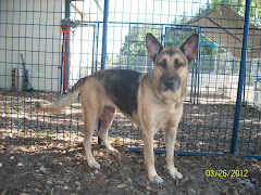 4/2/12 Dogs and Cats Some NO INTEREST URGENT. PLEASE ADOPT OR RESCUE. Tavares Florida Kill Shelter