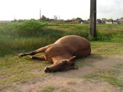 Interpretação e Significado dos Sonhos com Cavalo