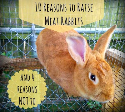 Greneaux Gardens 10 Reasons To Raise Meat Rabbits And 4