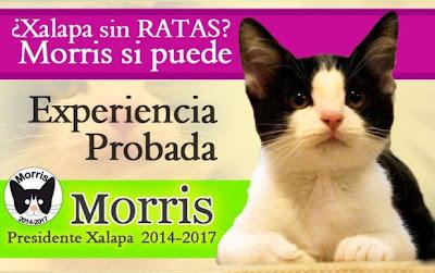 Kucing bertanding untuk jawatan Datuk Bandar di bandar Mexico