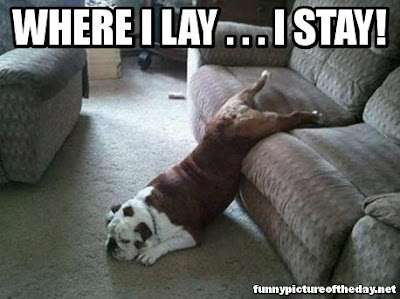 Where I Lay I Stay Funny Dog Sleeping Weird Meme