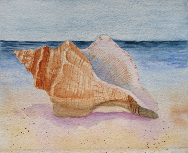 Watercolor Painting, Sea Shells, Watercolors Seashells ...