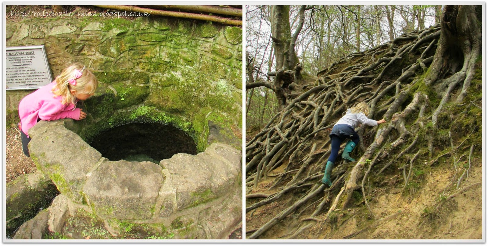 Wishing Well and climbing roots, Waggoner's Wells, National Trust