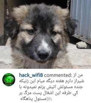 حمله اراذل و اوباش به پناهگاه حیوانات پردیس
