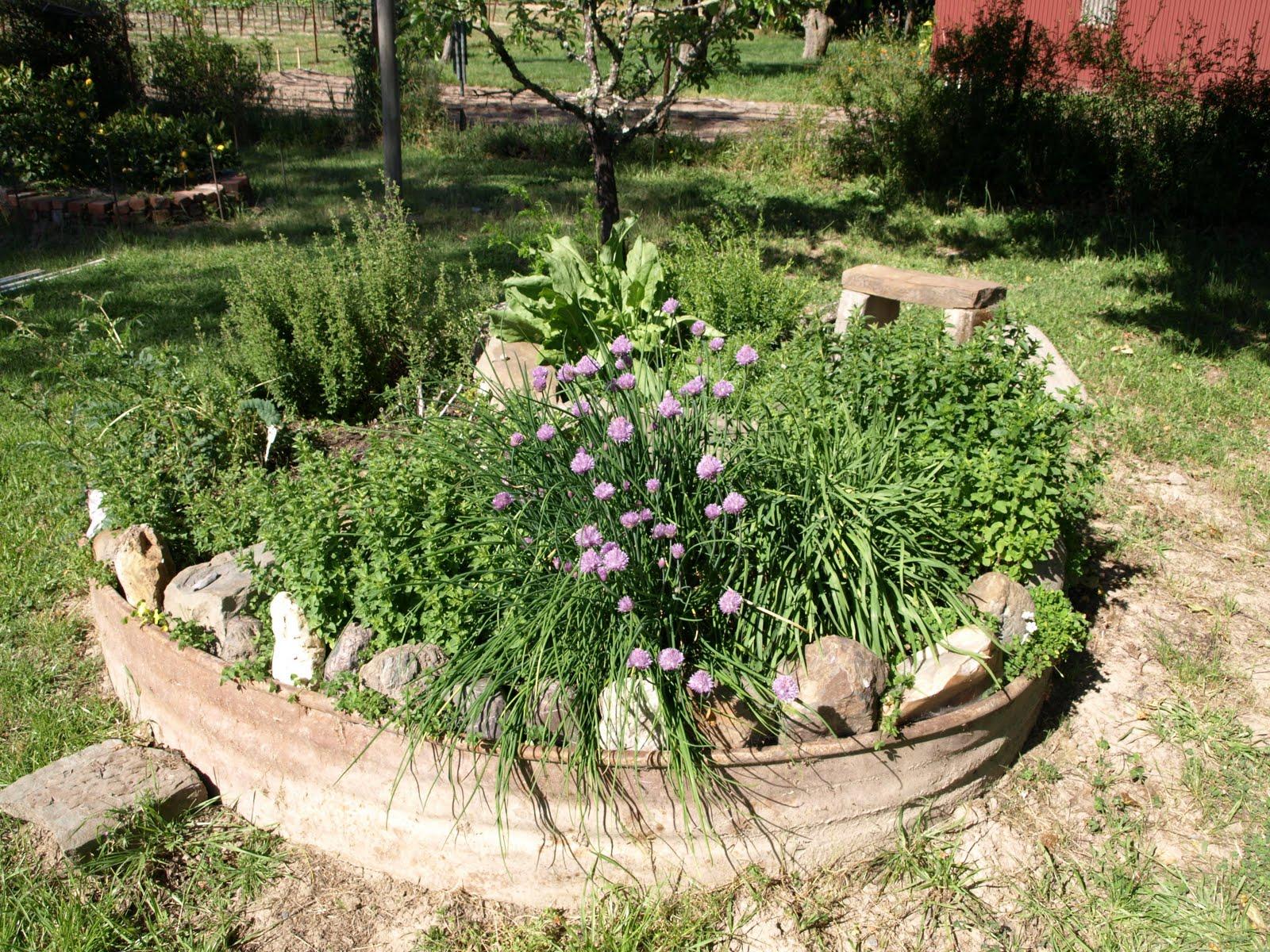 Shelley macdonald designs may 2011 for Herb garden design