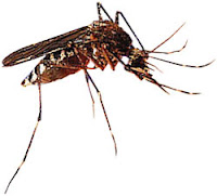 nyamuk, ciri orang yang disukai nyamuk