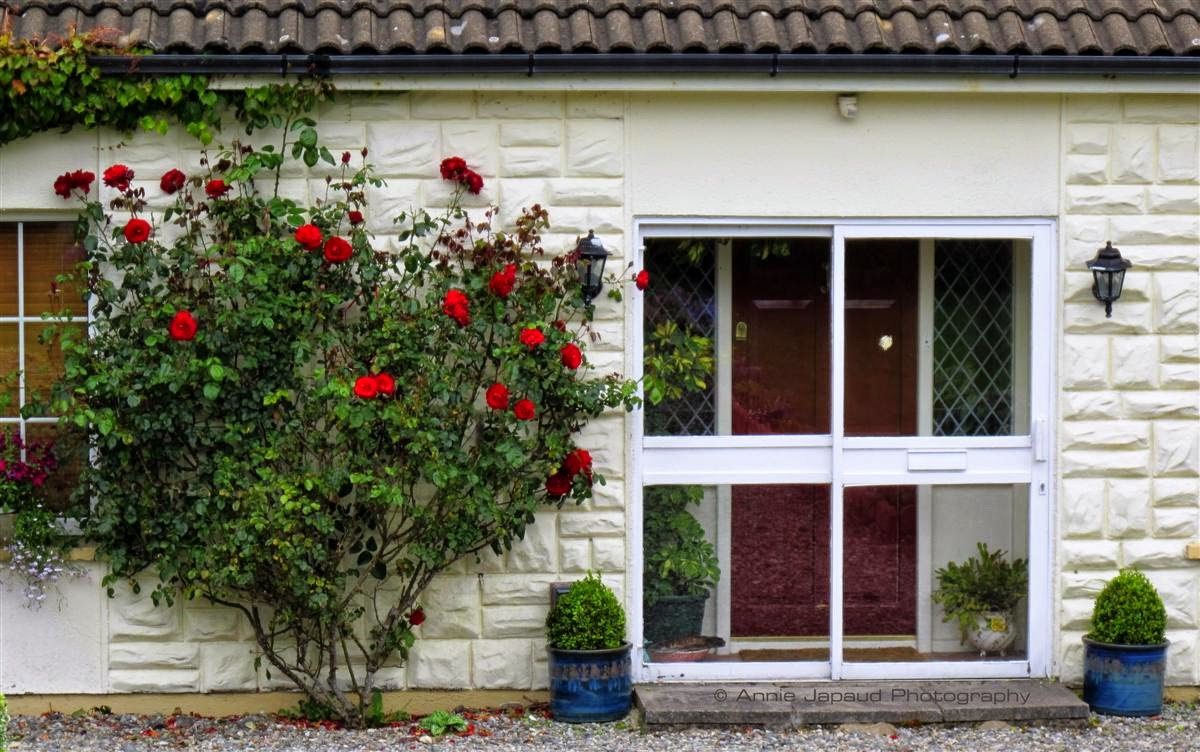 window, roses, door, house, Irish,