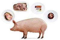Bahaya memakan Daging babi