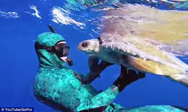 SEA TURTLE HUGS DIVER TO SAY THANK YOU