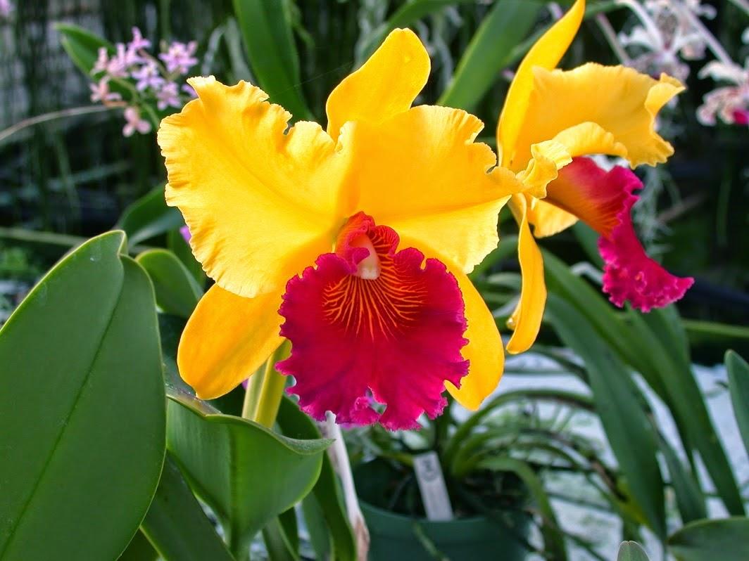 Orchidej královna květin