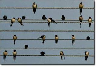 elektrik tellerine konan kuşlara neden elektrik çarpmaz
