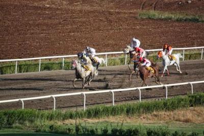 10.10.2013 diyarbakır yarış programı
