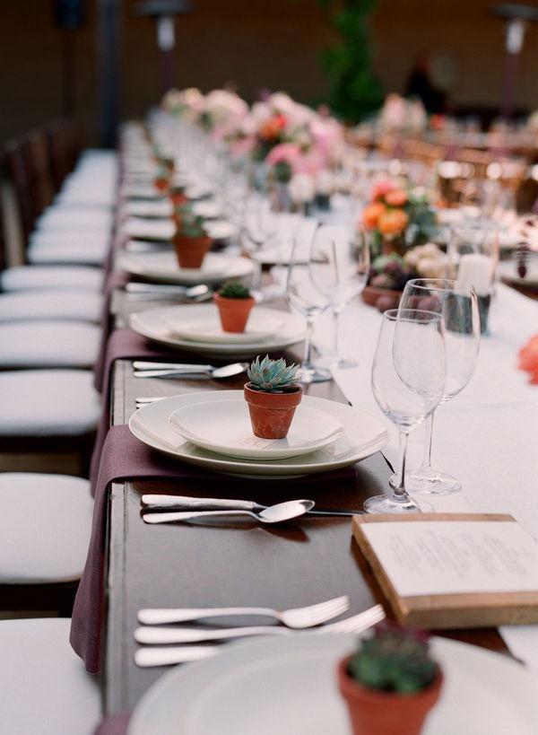 bodas y eventos suculentas plantas muy especiales