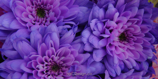 New York Web Design Studio New York NY Twitter Header