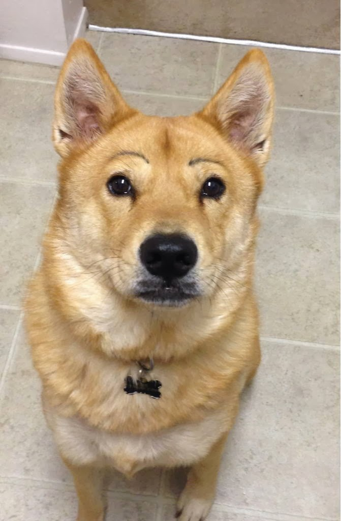 Cute dogs - part 8 (50 pics), funny dog with eyebrows