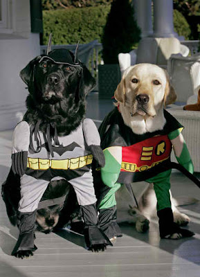 Labrador Retrievers - Haloween