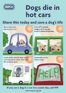RSPCA Dogs die in hot cars Cornwall