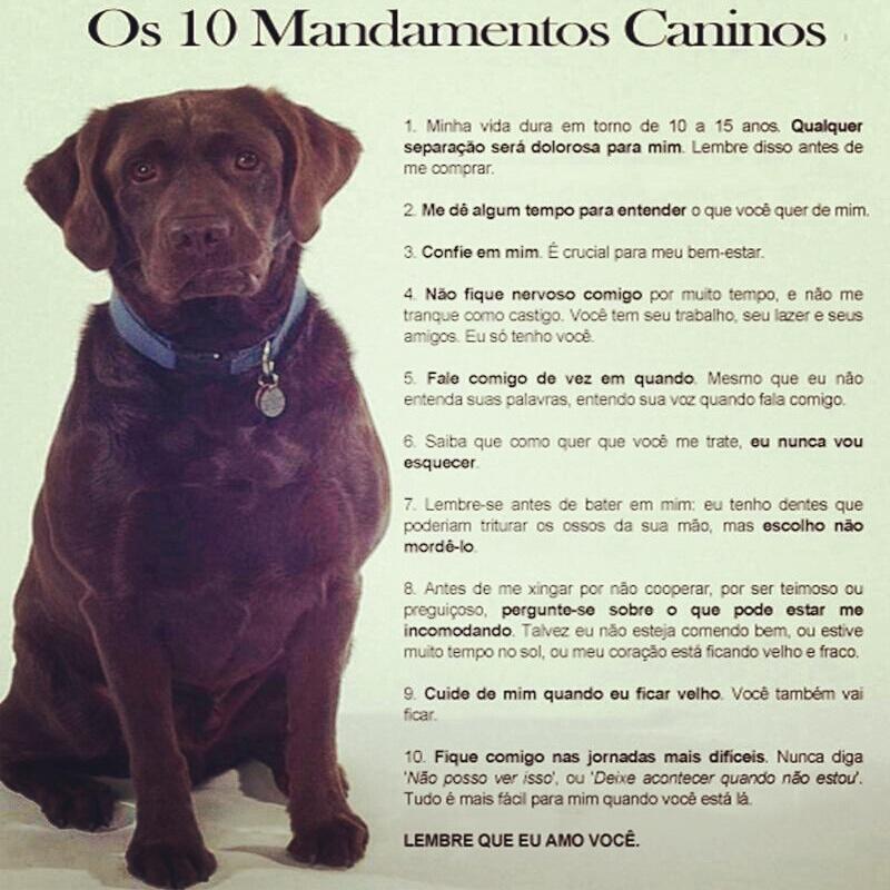 Os 10 mandamentos caninos